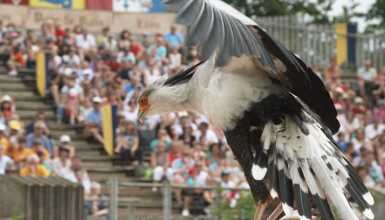 Bal-des-oiseaux-fantomes-@Puy-du-Fou
