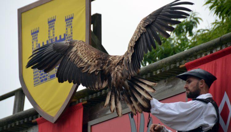 Bal-des-oiseaux_Puy-du-Fou-@David_Raynal