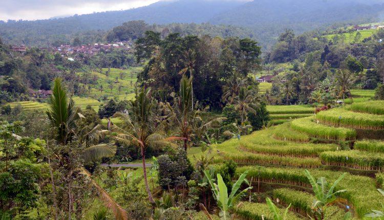 Bali Rizières @david_raynal